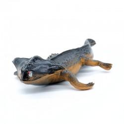 Starlux - Figurine - Dinosaure Diplocaulus